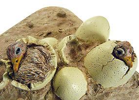 Eclosion des oeufs : autruche