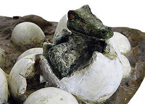 Eclosion des oeufs : crocodile