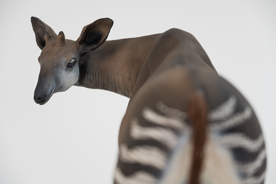 Mondonga, Okapi, terre cuite et fils de coton - Sculpture Anne Moreau-Vagnon
