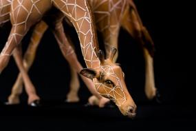 Couple de girafes, terracotta de synthèse,  fils de coton, métal et bois, sculpture Anne Moreau-Vagnon